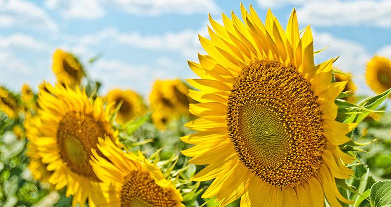 Was hilft gegen Schwitzen im Sommer?